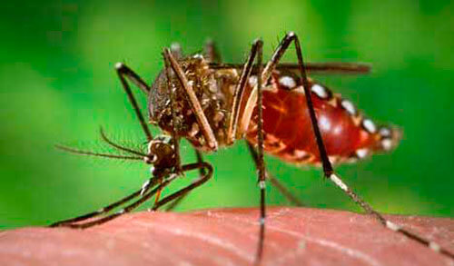 Procuraduría urgió por acciones inmediatas para frenar contagio y evitar muertes por dengue