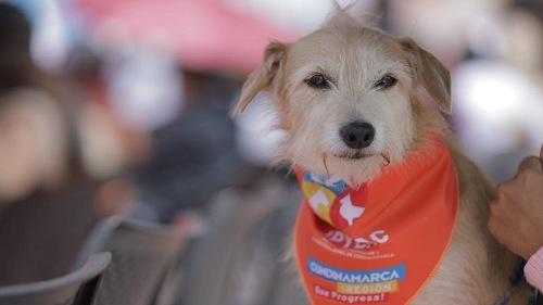 Cundinamarca cuenta unidad quirúrgica móvil para atención integral de animales